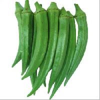 Bhindu 555 Hybrid Lady Finger Seeds