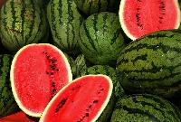 Kavya Hybrid Watermelon Seeds