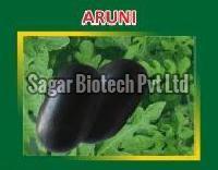 Aruni Hybrid Watermelon Seeds
