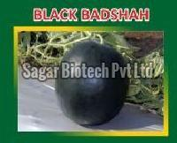 Black Badshah Hybrid Watermelon Seeds