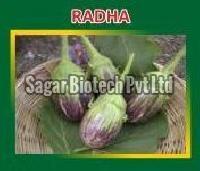 Radha Hybrid Brinjal Seeds