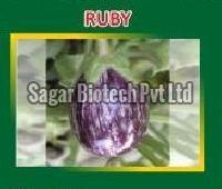 Ruby Hybrid Brinjal Seeds