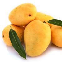 Mango Organic