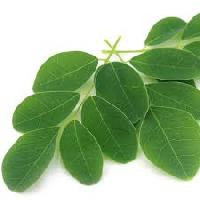 Moringa Oleifera Leaves