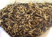 Marigold Kesri Seed