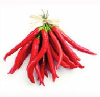 Hot Pepper Seed