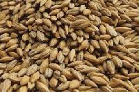 Fodder Seeds