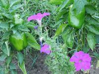 Flower And Vegetable Seedlings