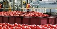 Tomato Ketchup Processing Plant