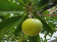 Elephant Apple Fruit Tea
