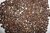 Babul Seeds