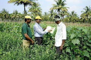 Contract Farming Consultant