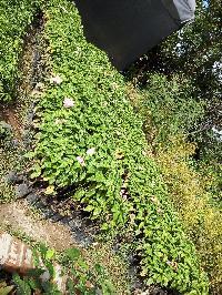Mosanda Flowers