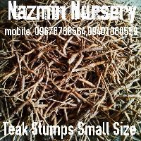 Teak Stumps Small