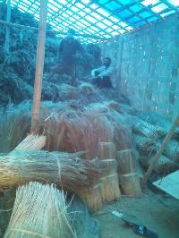 Dry Broom Grass