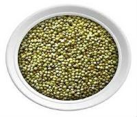 Bajara Seeds