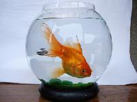 Fish Pot-fish Bowls