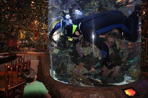 Fish Aquarium Cleaning Services