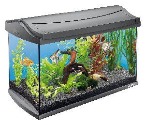 Imported Fish Aquariums