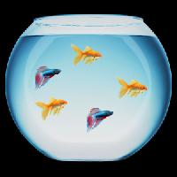 Artificial Fish Bowl