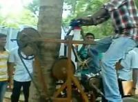 Coconut Tree Climber