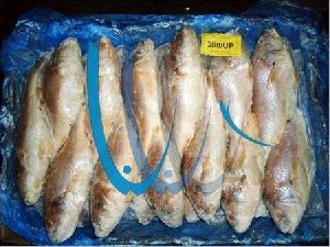Frozen Yellow Croaker Fish