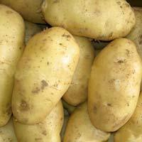 Pushkar Potato Seed