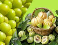 Supplements- Garcinia Cambogia
