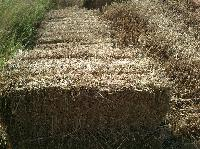 Paddy Straw Bundles ( Vaikol )