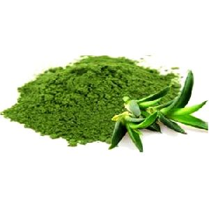 Aloe vera powder Manufacturer, Exporters, Supplier India
