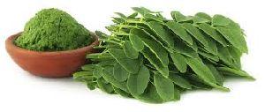 Moringa Leaf Powder Manufacturer, Exporters, Supplier India