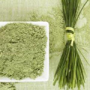 Weizengras Pulver Hersteller, Exporteure, Lieferant Indien