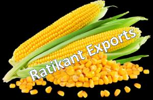 Prime agro food products bhubaneswar