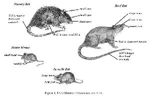 Rodent Control Treatment Services