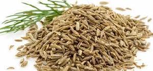 Cumin Seeds 01