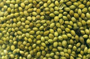 Green Coriander Seeds 02