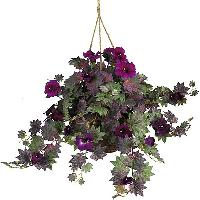 Hanging Basket Indoor Plant