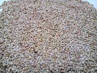 Organic Quinoa (Red Quinoa ) Seed