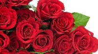 Fresh Red Rose Flowers