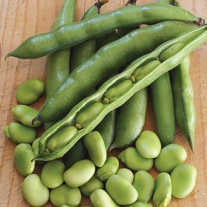 Fresh Broad Beans (avarakkai)
