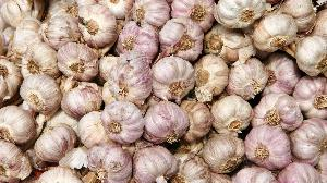 Fresh Garlic (poondu)