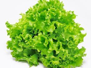 Fresh Lettuce (ellaidhoo)