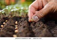 Plantation Seeds