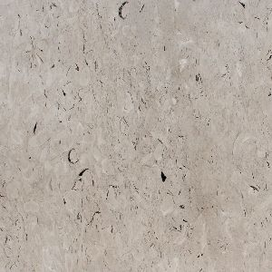 Fossil Grey Marble Stone