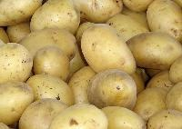 Fresh Lokar Potato
