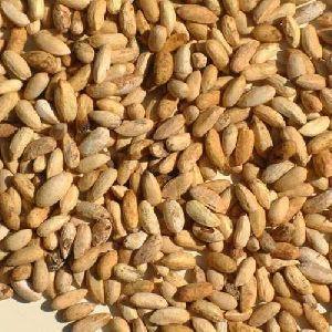 Pure Dried Neem Kernels