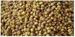 Sorghum Seeds