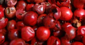 Red Pepper Seeds