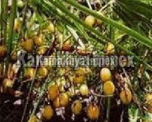 Pure Saw Palmetto Nuts Oil