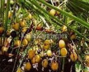 Serenoa Repens Oil ( Saw Palmetto Oil )